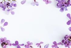 Flores roxas no fundo de mármore branco com sala para o texto Imagens de Stock Royalty Free