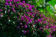 Flores roxas no jardim fotografia de stock
