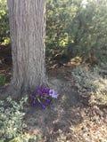 Flores roxas que florescem na base do tronco de árvore Imagem de Stock