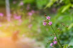 Flores roxas selvagens no fundo verde Fotos de Stock Royalty Free