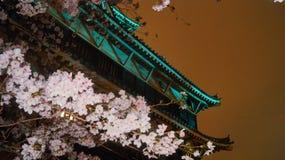 Flores Sakura frente al castillo Hiroshima Stock Photography