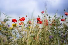 Flores salvajes imágenes de archivo libres de regalías