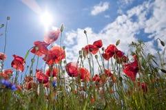 Flores salvajes Foto de archivo libre de regalías