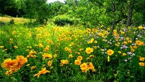 Flores salvajes Imagen de archivo