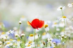 Flores salvajes imagenes de archivo