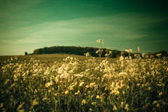 Flores salvajes Fotos de archivo libres de regalías