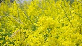 Flores salvajes almacen de metraje de vídeo