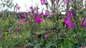 Flores salvajes Fotos de archivo