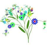Flores salvajes Imagen de archivo libre de regalías