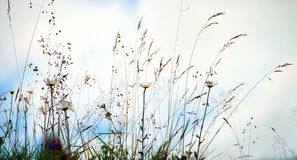 Flores salvajes Fotografía de archivo