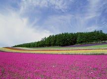 Flores salvajes algún grano visible imagen de archivo libre de regalías