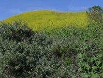 Flores salvajes Aliso Viejo CA LOS E.E.U.U. de la colina de la cometa Fotos de archivo libres de regalías