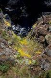 Flores salvajes amarillas en un acantilado sobre el mar fotos de archivo libres de regalías
