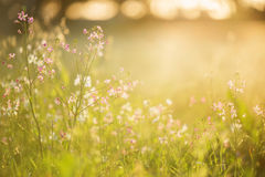 Flores salvajes bajo puesta del sol Imágenes de archivo libres de regalías