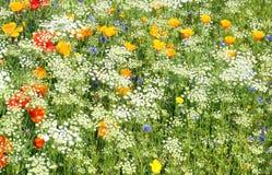 Flores salvajes blancas y amarillas imagenes de archivo