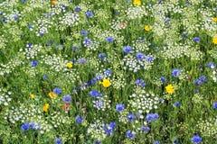 Flores salvajes Blanco, azul y amarillo imagenes de archivo