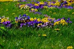 Flores salvajes brillantes Foto de archivo libre de regalías