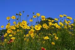Flores salvajes coloridas Foto de archivo libre de regalías