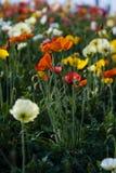 Flores salvajes coloridas Fotografía de archivo libre de regalías
