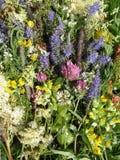 Flores salvajes coloridas Imagen de archivo