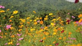 Flores salvajes coloridas que soplan en un viento suave metrajes