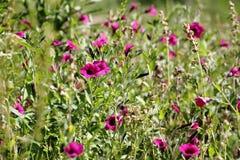 Flores salvajes con el fondo defocused Fotos de archivo libres de regalías