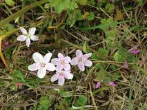 Flores salvajes con la abeja Imagen de archivo libre de regalías