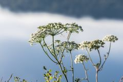 Flores salvajes contra fondo de la niebla Foto de archivo libre de regalías