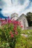 Flores salvajes de la abadía de Muckross, condado Kerry Imagenes de archivo