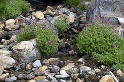 Flores salvajes de la montaña Imágenes de archivo libres de regalías