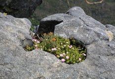 Flores salvajes de la montaña de la tabla Foto de archivo