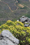 Flores salvajes de la montaña de la tabla Fotos de archivo libres de regalías