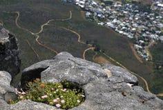 Flores salvajes de la montaña de la tabla Fotos de archivo
