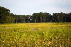 Flores salvajes de la pradera Foto de archivo libre de regalías