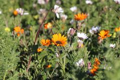 Flores salvajes de la primavera Imagen de archivo
