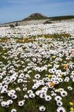 Flores salvajes de la primavera Foto de archivo libre de regalías