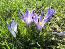 Flores salvajes de la primavera Fotografía de archivo