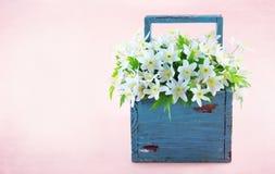 Flores salvajes 2 de la primavera de la anémona de madera Foto de archivo