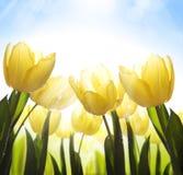 Flores salvajes del arte cubiertas con rocío en la luz del sol Foto de archivo libre de regalías