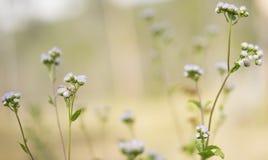 14 Fotos de Flores Impresionantes para Recibir la Primavera