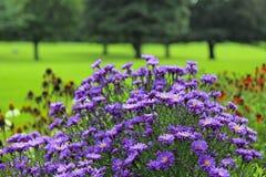 Flores salvajes del campo en parque Fotografía de archivo libre de regalías