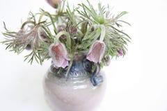 Flores salvajes del resorte Imagen de archivo