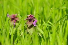 Flores salvajes del resorte Foto de archivo