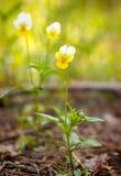 Flores salvajes del resorte fotografía de archivo