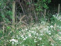 Flores salvajes delante de una cerca del arbolado Fotos de archivo