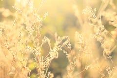 Flores salvajes e hierba Imágenes de archivo libres de regalías