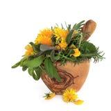 Flores salvajes e hierbas imagen de archivo