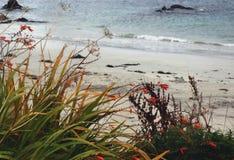Flores salvajes e hierbas azotadas por el viento en la orilla de la isla de I Fotografía de archivo