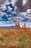 Flores salvajes en agujas Imagenes de archivo