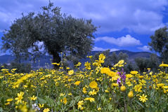 Flores salvajes en arboleda verde oliva Imagen de archivo libre de regalías